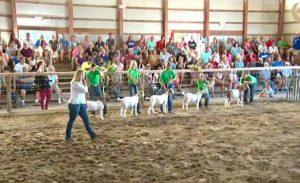 Clinton County Fair Schedule  Supreme Showmanship LIVE on
